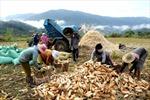 Khởi sắc ở huyện miền núi Tánh Linh