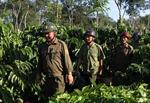 Hiệu quả từ tổ dân phòng bảo vệ cà phê