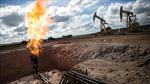 OPEC thiệt hại nặng do giá dầu giảm mạnh