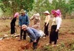 Người Dao giữ vệ sinh môi trường