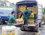 Bắt, tiêu hủy 24.000 con gà giống nhập lậu từ Trung Quốc