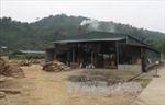 Sản xuất đũa gỗ gây ô nhiễm môi trường