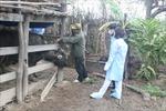 Lạng Sơn chủ động phòng chống đói rét cho gia súc