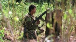 Colombia: FARC tuyên bố đơn phương ngừng bắn
