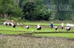 'Dân vận khéo' đổi thay xã vùng cao Yên Bái