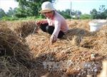 Đồng Nai cần xây dựng một nền nông nghiệp bền vững