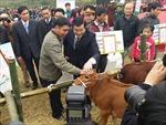 Tạm dừng trao bò tại các vùng có dịch lở mồm long móng