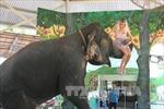 Điều tra vụ bé trai bị voi giẫm chết khi chờ xem xiếc