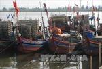 Thi thể thuyền viên vướng trong lưới ngư dân