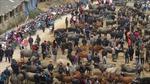 Chợ bò Nghiên Loan