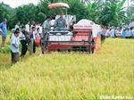Nâng cao giá trị và hiệu quả sản xuất nông nghiệp