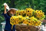 Bắc -Trung - Nam duy trì nắng ráo