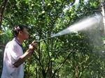 Kỹ sư 'chân đất' điều khiển tưới cây qua điện thoại di động