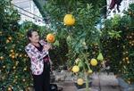 Thị trường hoa, cây cảnh Tết: 'Hàng độc' hút khách