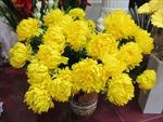 Hoa giả cạnh tranh... hoa thật