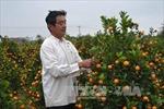 Thị trường đào, quất Tết: Nhà vườn ngóng người mua