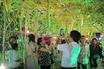 Đồng lúa, vườn bầu 'náo nức' hội hoa xuân 'Mùa gặt'