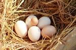 Xuân về, nhớ ổ trứng gà của bà