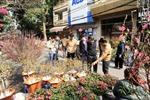 Vùng hoa Hà Nội ngày giáp Tết