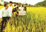 Đồng hành với sự nghiệp phát triển nông nghiệp, nông thôn Hà Giang