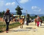 'Ngân hàng bò' mang Tết đến với đồng bào nghèo