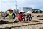 Làng nghề làm khô biển ở Cà Mau vào Tết