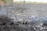 Cảnh báo nguy cơ cháy rừng tràm U Minh Hạ