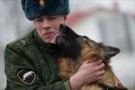 Cảnh khuyển trong quân đội Nga