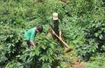 Người dân huyện Tu Mơ Rông đã có của ăn, của để