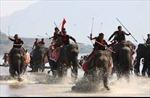 Tưng bừng Hội đua voi huyện Lắk
