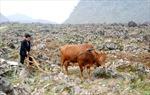 Chuyện xóa nghèo trên Cao nguyên Đá - Bài cuối: 'Bắt đá nảy mầm'
