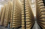 Pho mát Parmesan 'bước chân' vào khủng hoảng