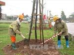 Trưng cầu ý dân về thay thế cây xanh