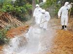 Chủ động phòng chống cúm gia cầm AH5N6