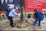 Hà Nội đình chỉ một số cán bộ trong vụ chặt hạ cây xanh