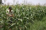 Bệ phóng cho ngành nông nghiệp