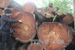 Cận cảnh bãi tập kết cây bị đốn hạ tại Hà Nội