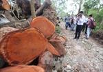 Công khai điểm tập kết gỗ sau chặt hạ tại Hà Nội