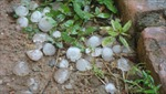 Mưa đá, lốc xoáy gây thiệt hại nặng tại Đắk Nông