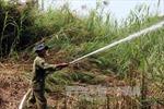 Dập tắt vụ cháy hơn 40 ha rừng ở Long An