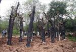 Cải tạo cây xanh Hà Nội cần sự đồng thuận cao
