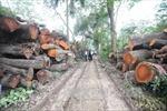 Bảo tồn, phát triển cây xanh ở Hà Nội: Cần sự chung tay của toàn xã hội