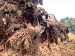Xử phạt công ty gỗ gây ô nhiễm