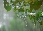 Bâng khuâng mưa xuân