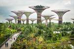 Singapore hướng đến 'thành phố trong vườn'