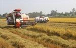 Cần mở rộng quy mô thu mua tạm trữ lúa gạo