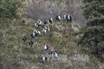 Đã phân tách 150 mẫu ADN nạn nhân vụ máy bay rơi ở Pháp