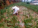 Mưa đá, gió lốc tại Đà Lạt gây thiệt hại khoảng 10 tỷ đồng