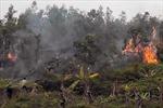Hóa vàng bất cẩn gây cháy hàng ngàn m2 vườn đồi