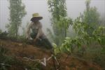 Lào Cai phát triển cây bản địa